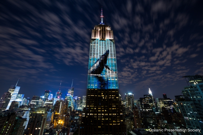 Empire State NY_ Whale _credit OPS